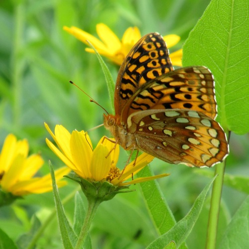 butterfly on co111.jpg