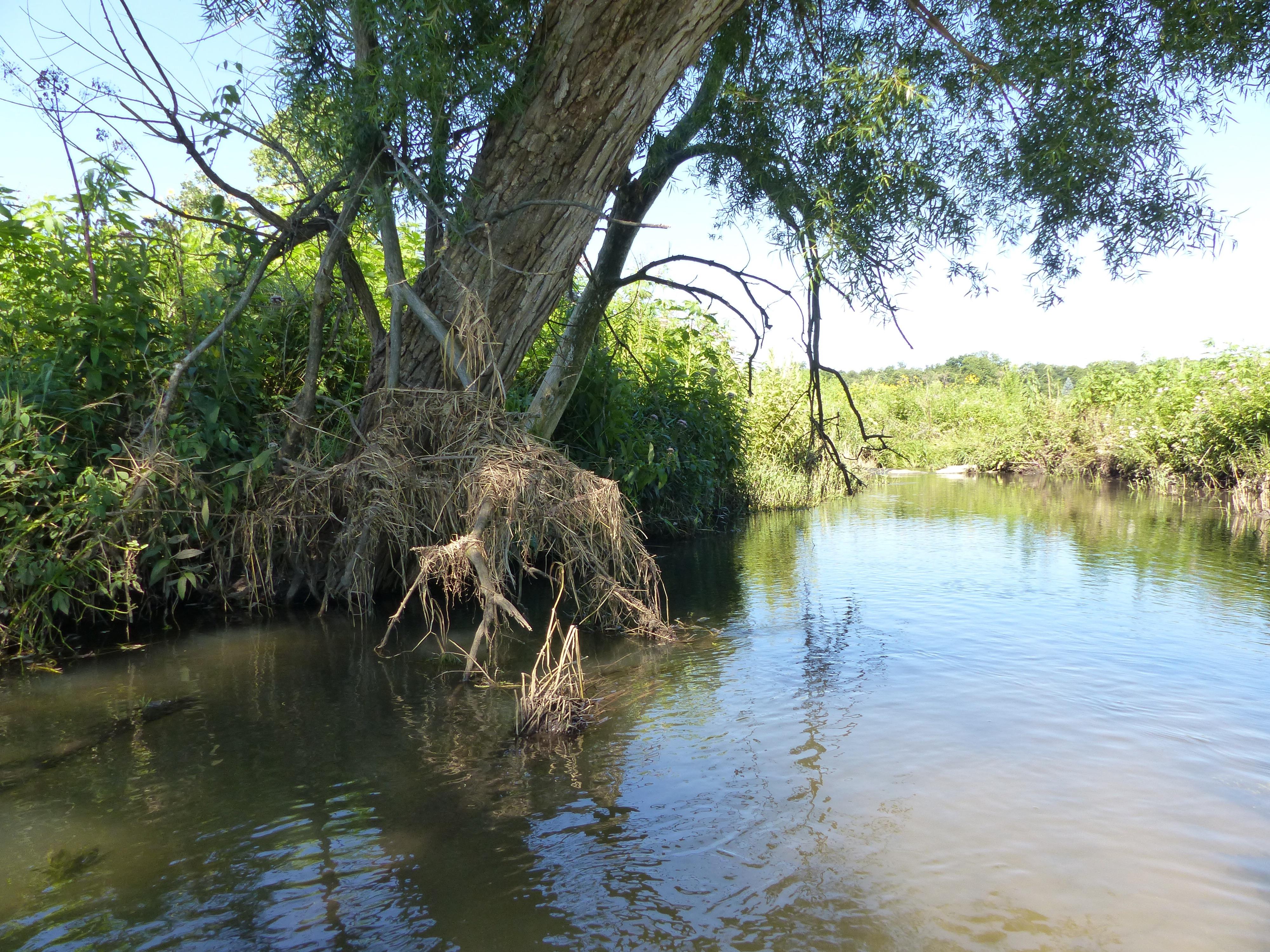 Clear Creek Nachusa Grasslands 7:17.jpg