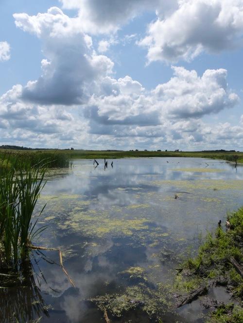 Nachusa Grasslands 817.jpg