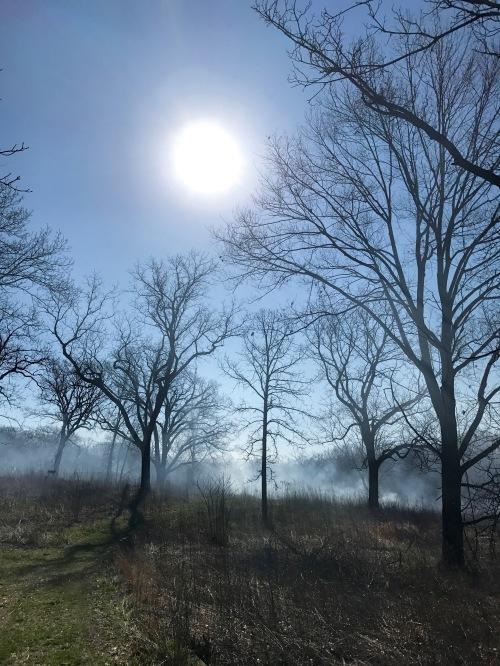 Schulenberg Prairie 417.jpg