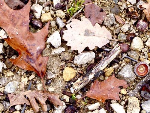 Leaves-SPMA111317g.jpg