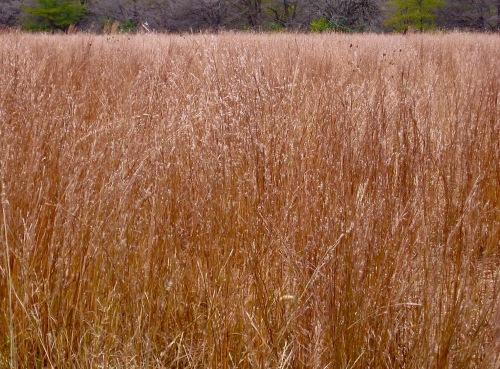 Midewin 2012 tallgrassjpg.jpg