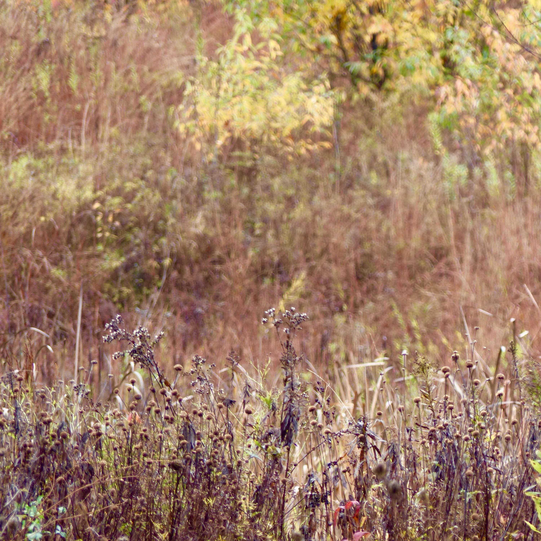 Nachusa Grasslands 11 17 rainyday.jpg
