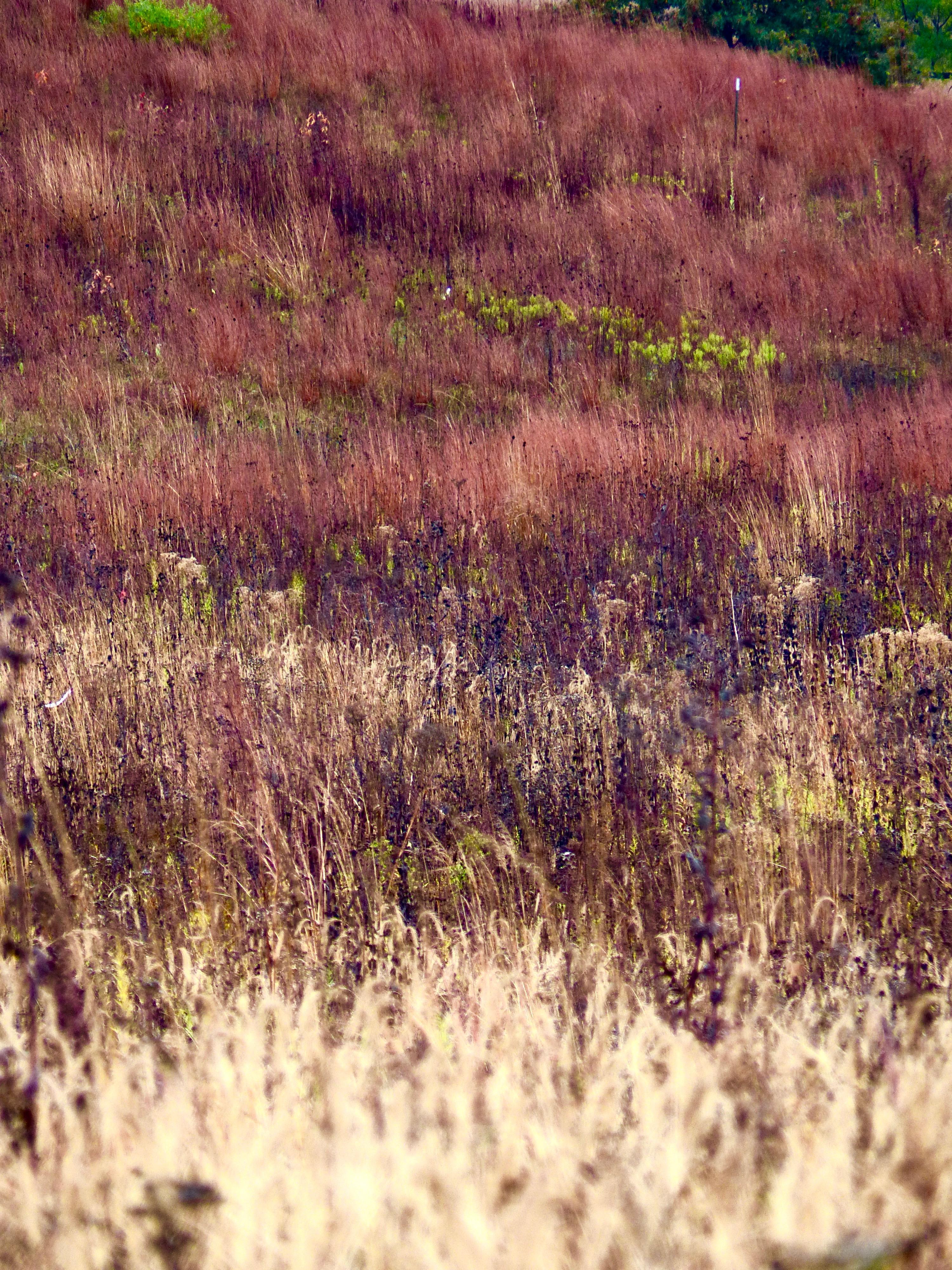 Nachusa Grasslands 1117 Landscape