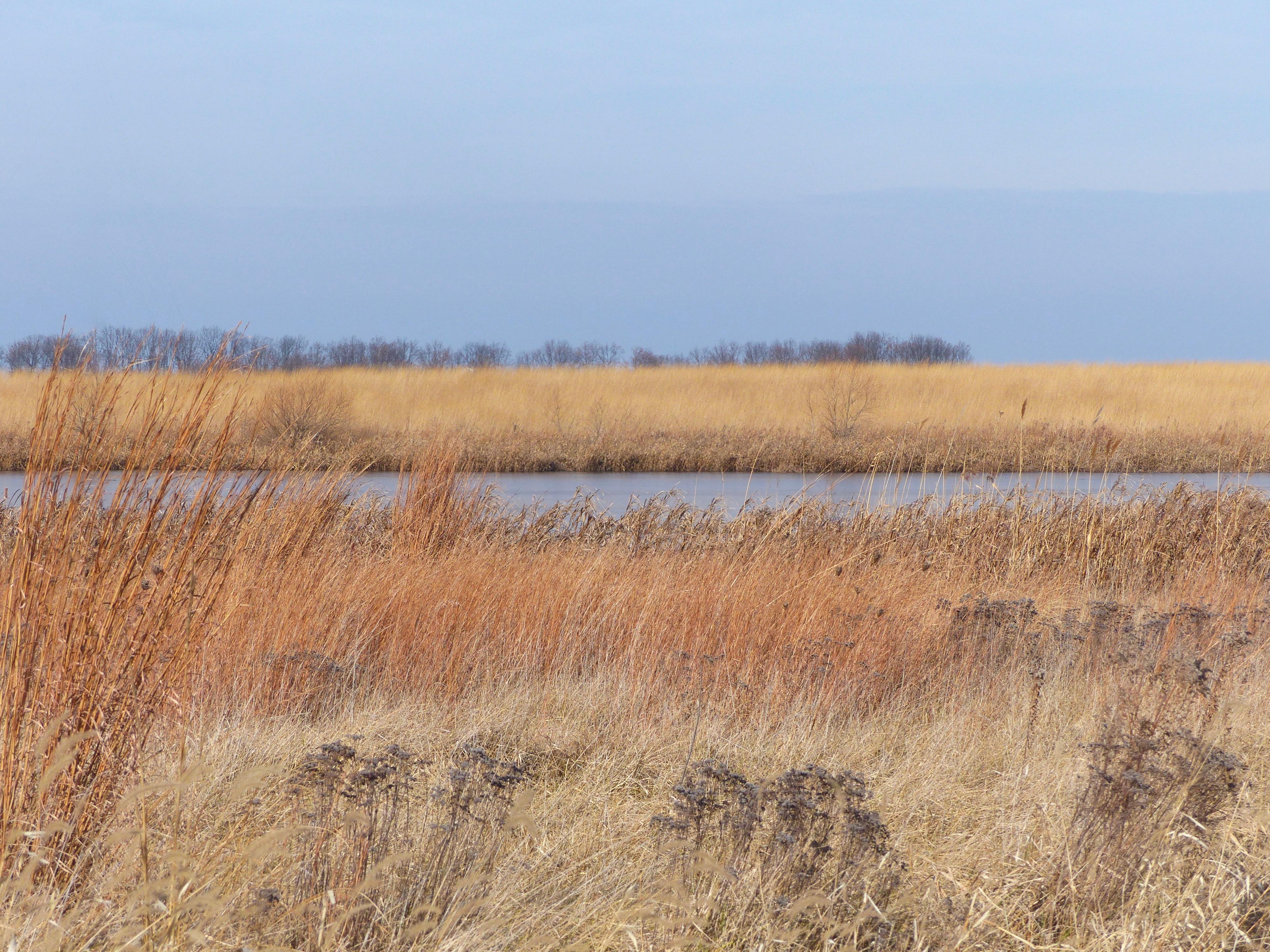 wetlandOrlandGrassland122317.jpg