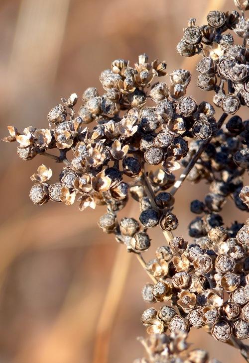 wildquinineaftonprairie121617