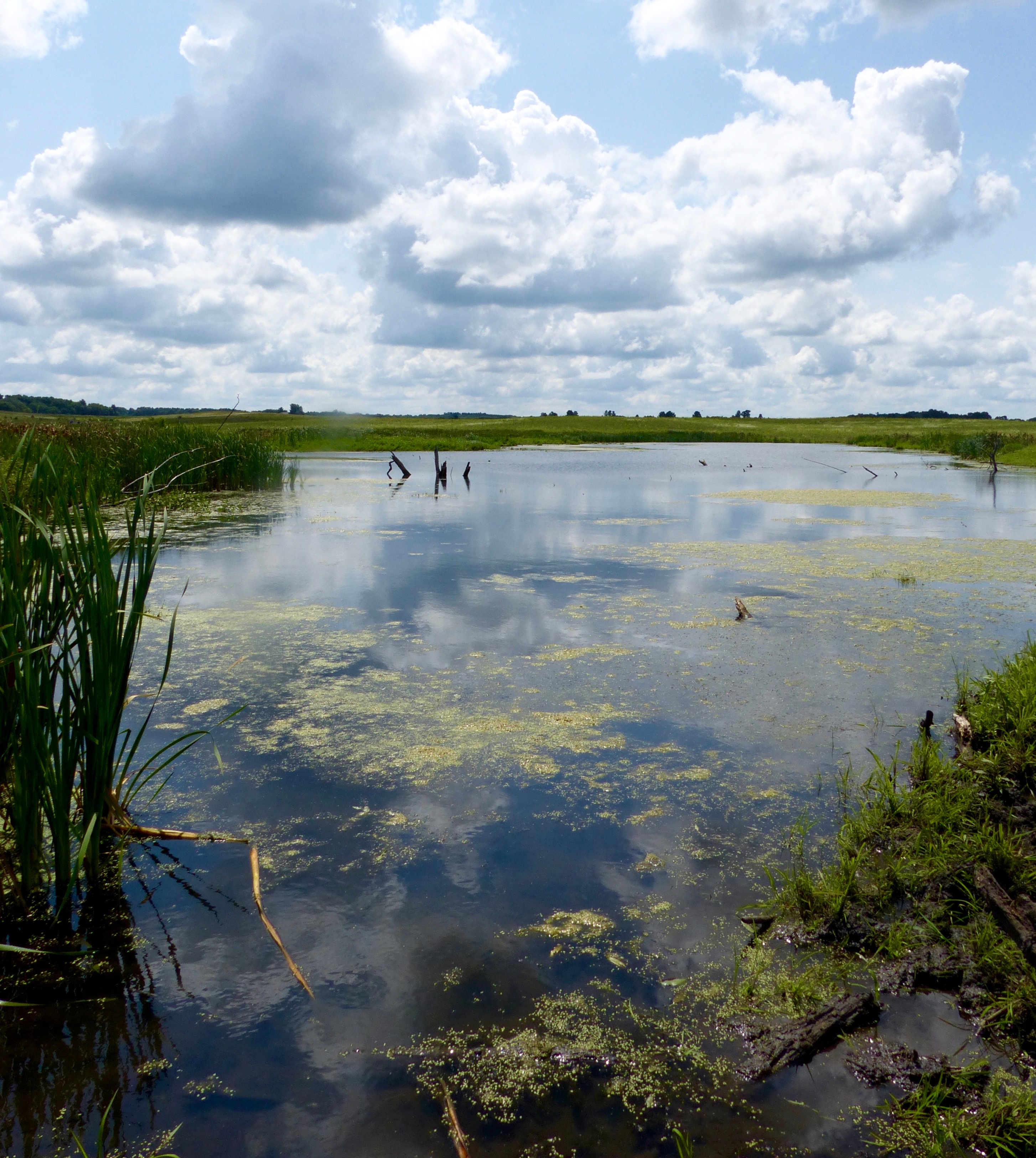 Nachusa Grasslands Ponds 2017 (1).jpg
