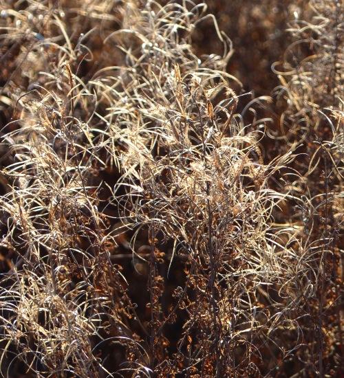 OrlandGrasslandgrassesandforbes122317lookslikesepia!