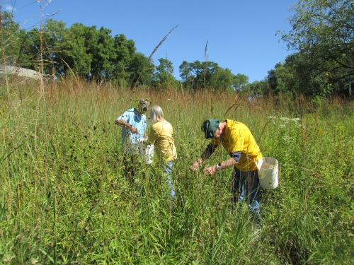 volunteers in the tallgrass SPMA.JPG
