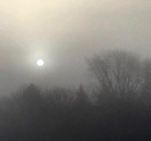 FoggydayinFebruary21818 (1) copy.jpg