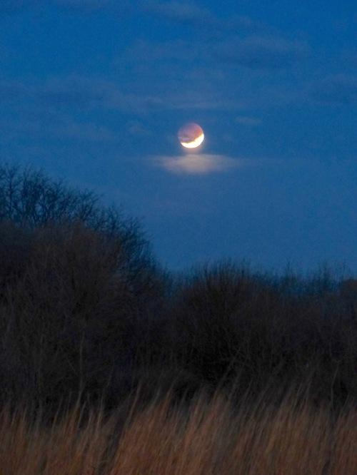 lunareclipse13118 copy.jpg