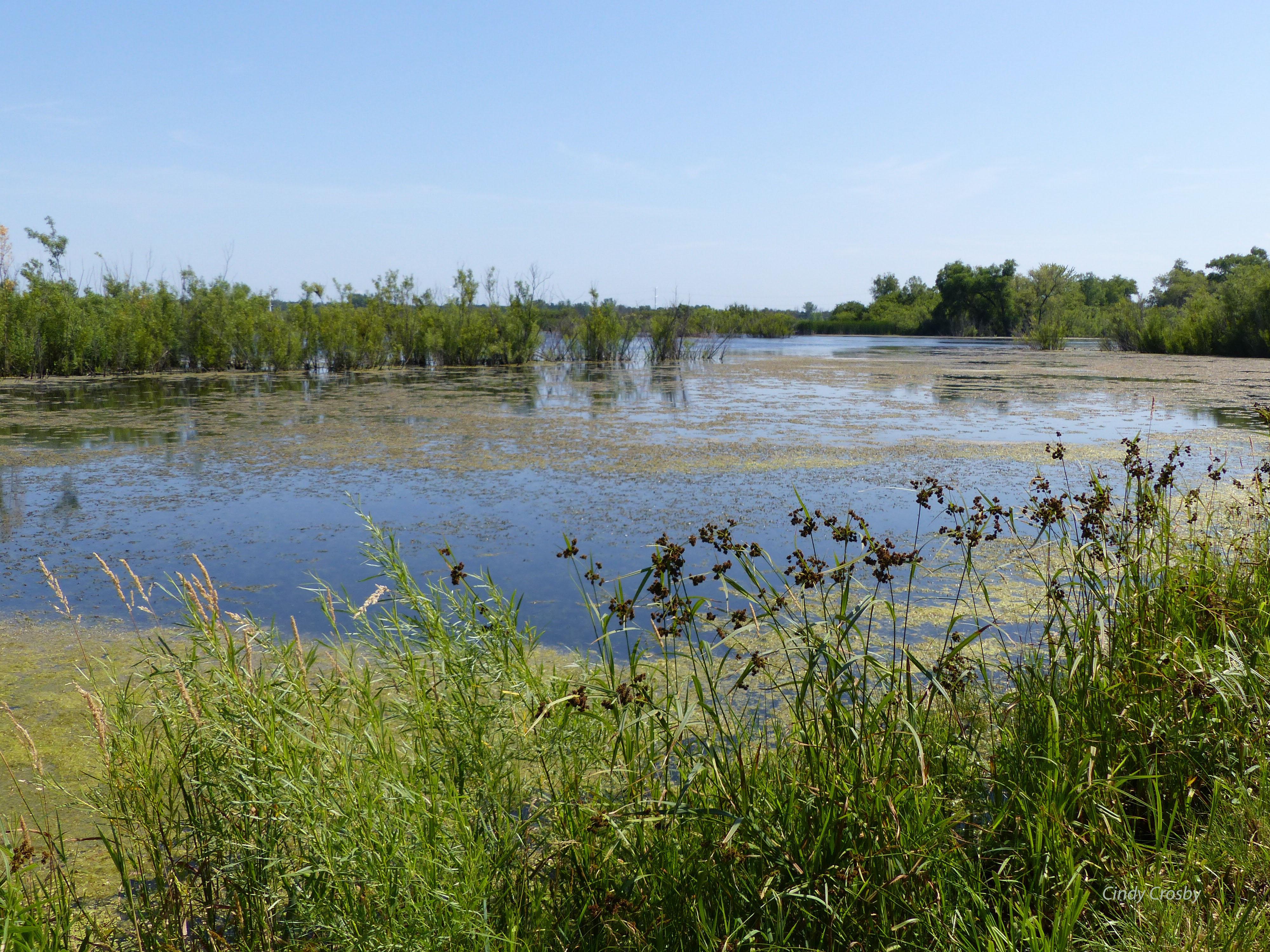 wetlandsFermiLab62918interiorringwm.jpg