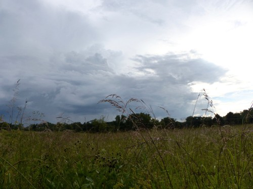 SPMA-rainyday9318.jpg