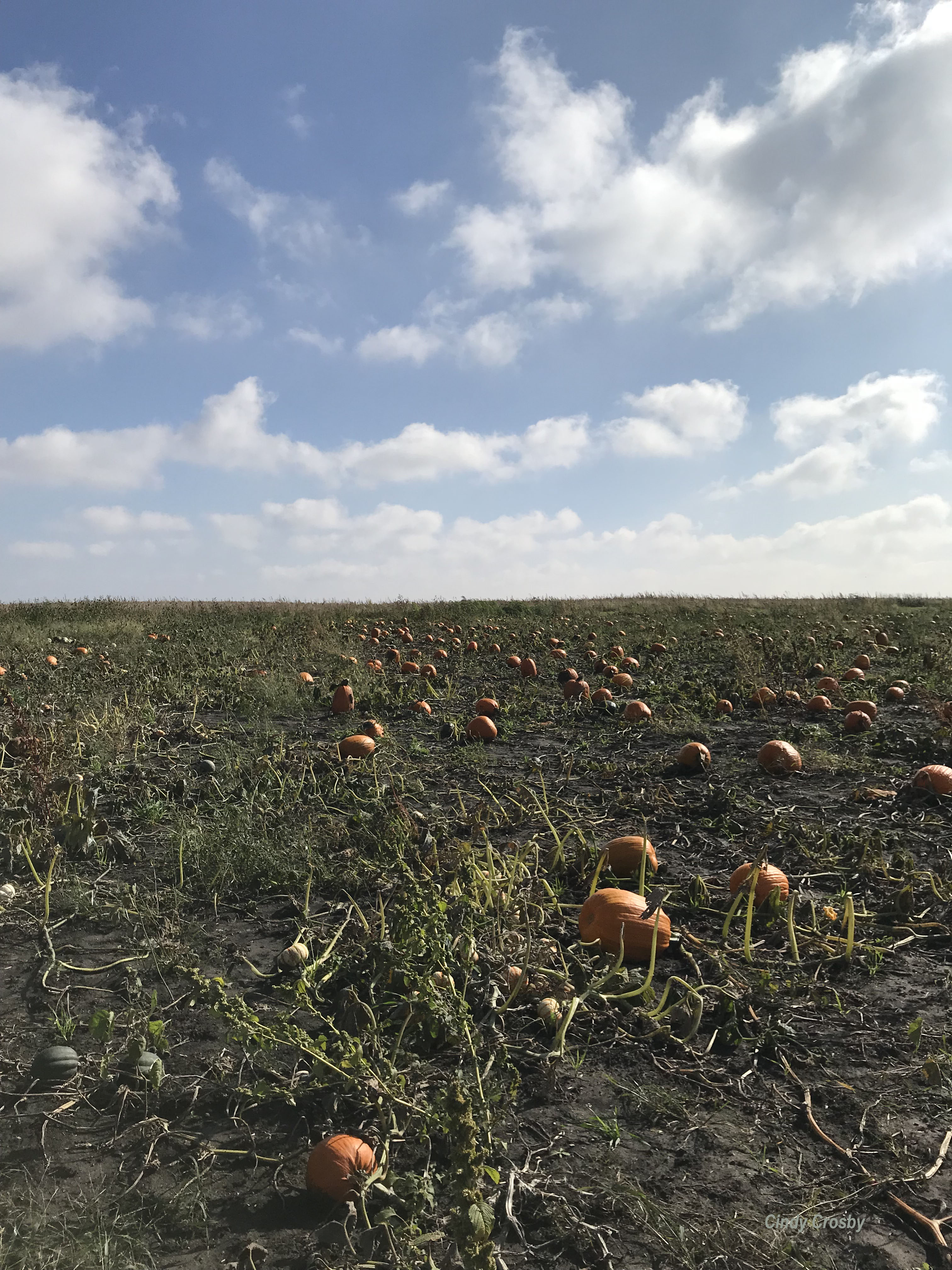 WMOctober in the Pumpkin Patch Malta IL 10-13-18.jpg