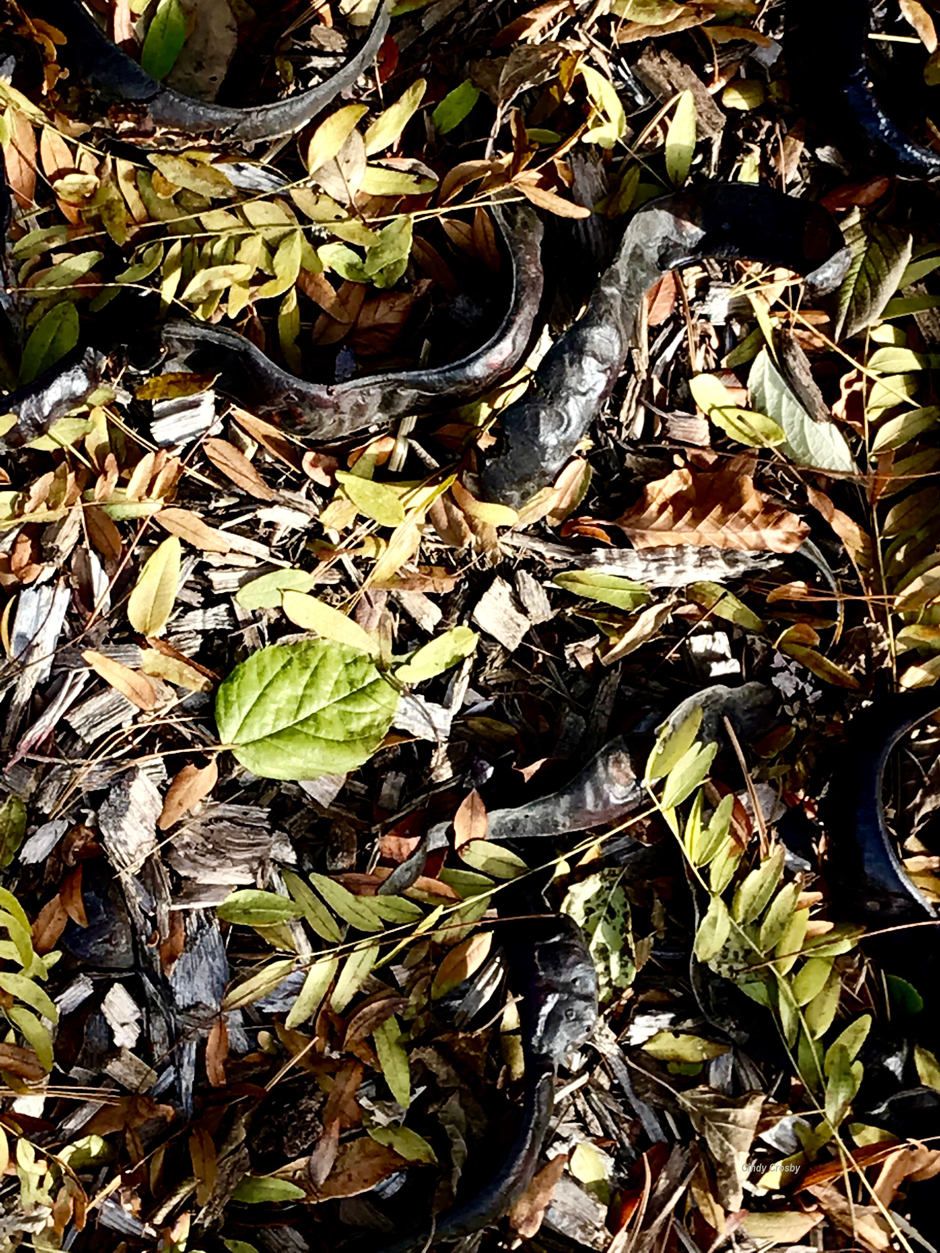Morton Arboretum NovemberWM leaves (1).jpg