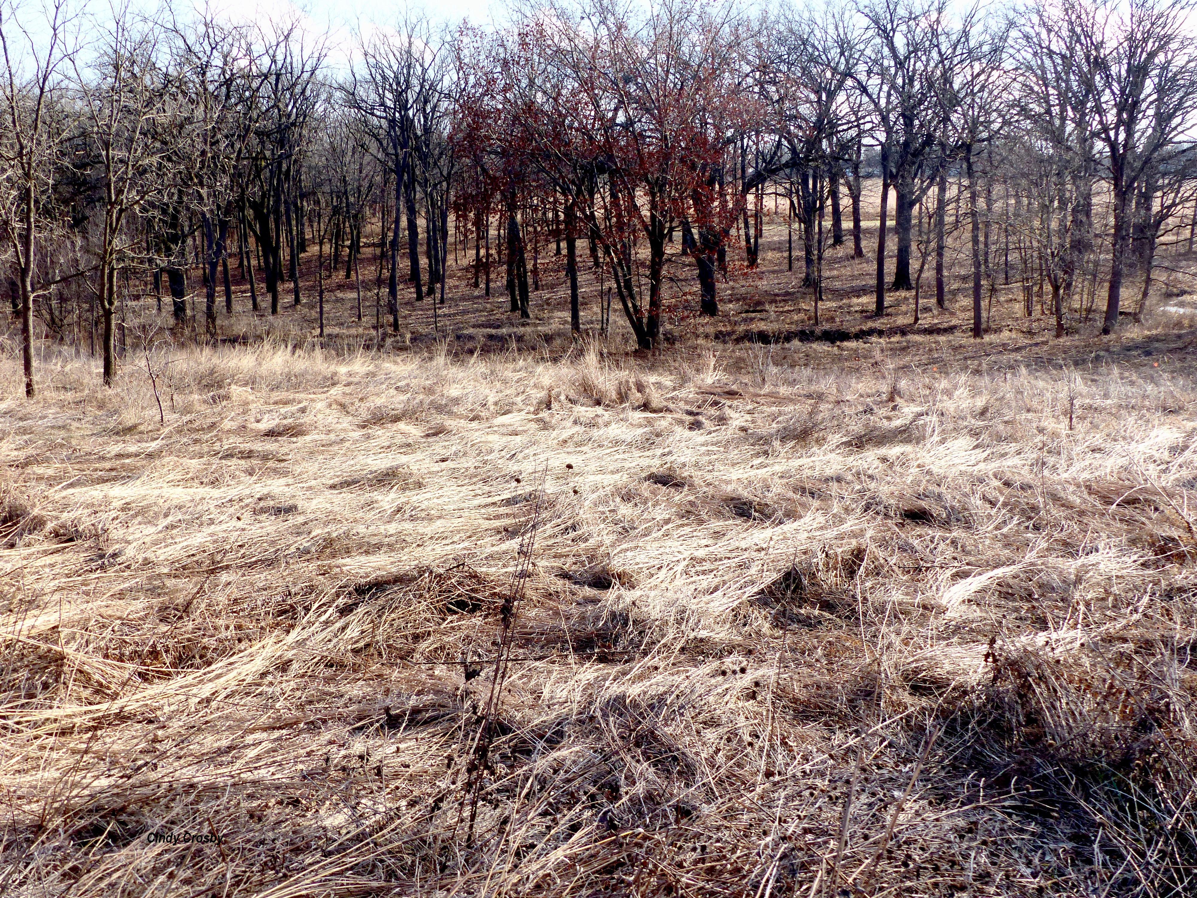 SPMA122318-flattenedgrassesWM.jpg
