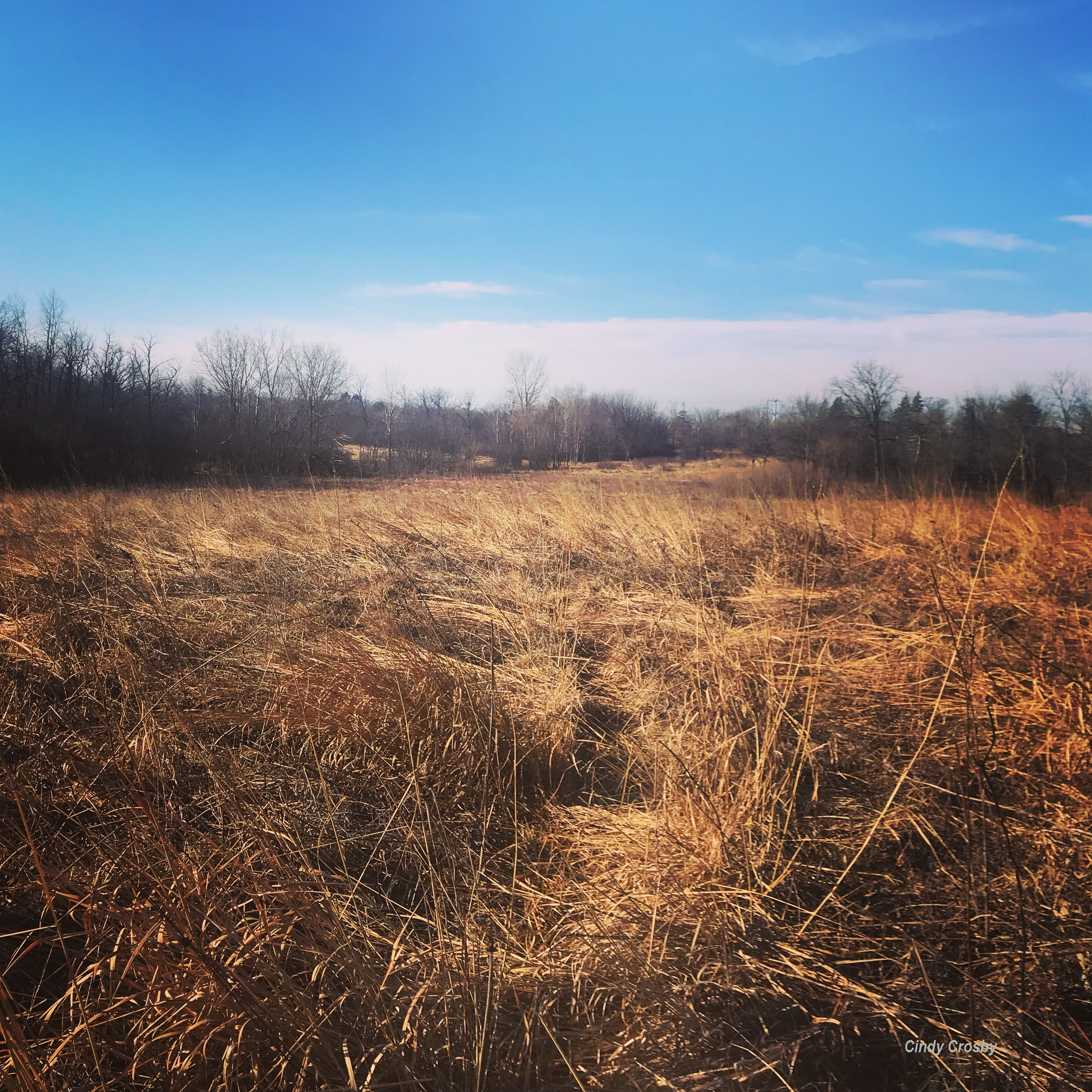 belmont prairie 121618WM.jpg
