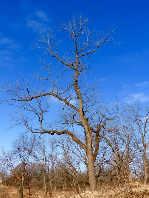 squirrel tree (12) SPMA12818WM.jpg