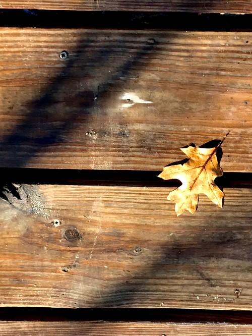 Ferson Creek Fen BoardwalkWM 1519.jpg