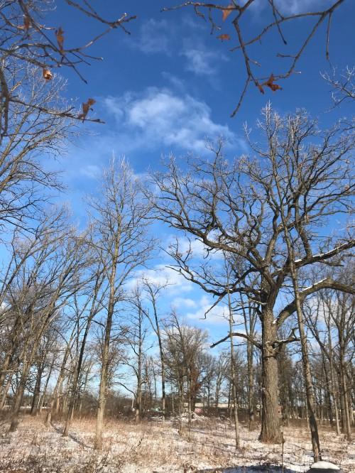 Wolf Road Prairie SavannaWM 11319.jpg
