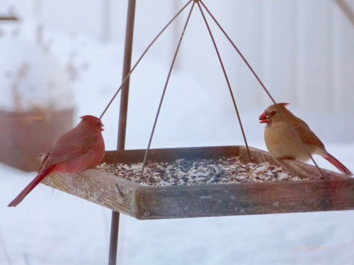 cardinals219WM.jpg