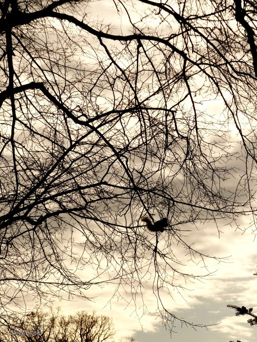Squirrel tree MA 21719WM copy.jpg