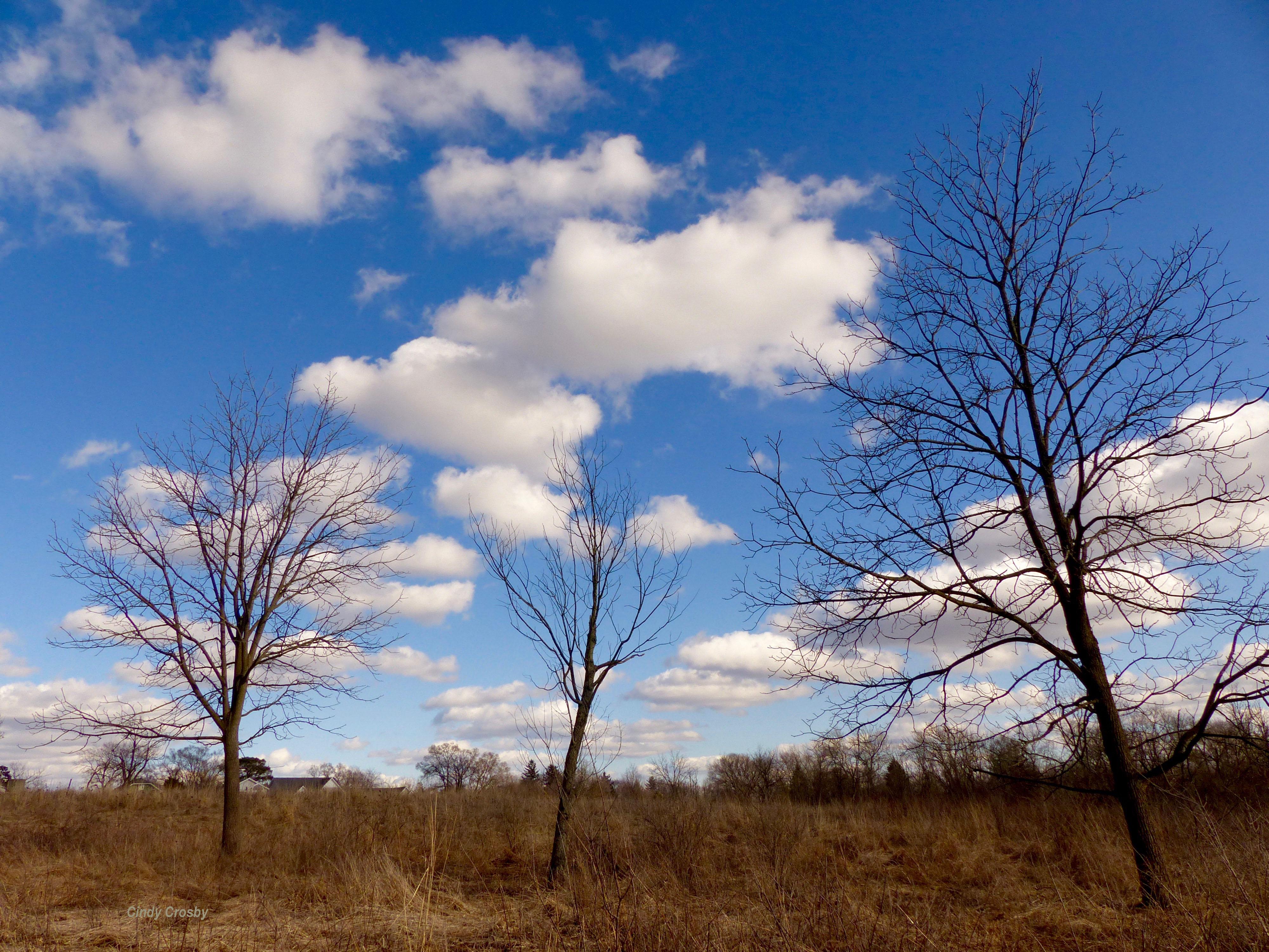 Belmont trees 31619WM.jpg
