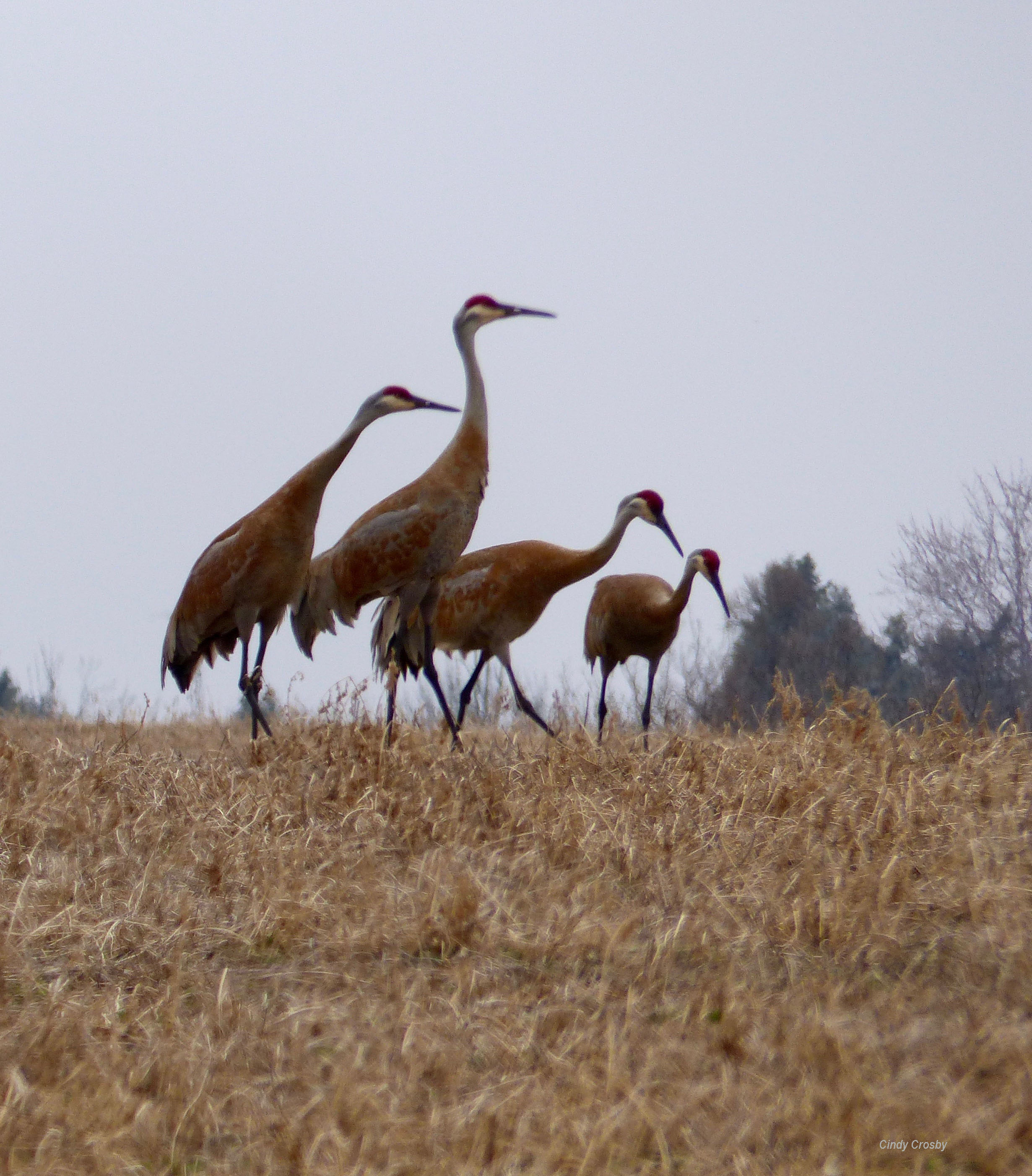 Crane Family 4719 Green Lake WisWM.jpg