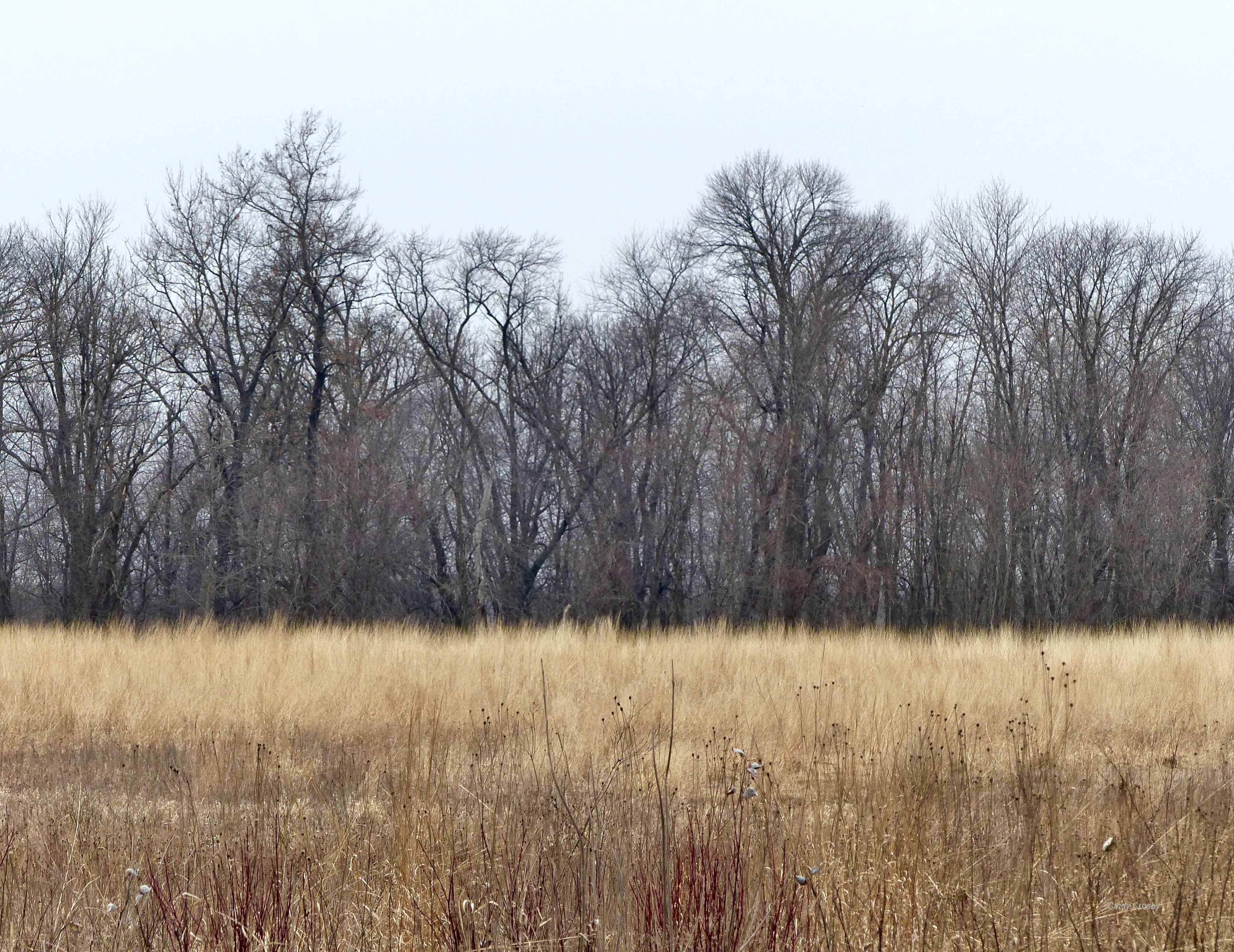 Horicon Marsh 4719 PrairieWoodlandWM.jpg