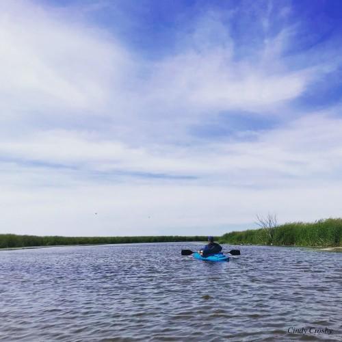 Jeff paddles Horicon Marsh 6-22-19WM .jpg