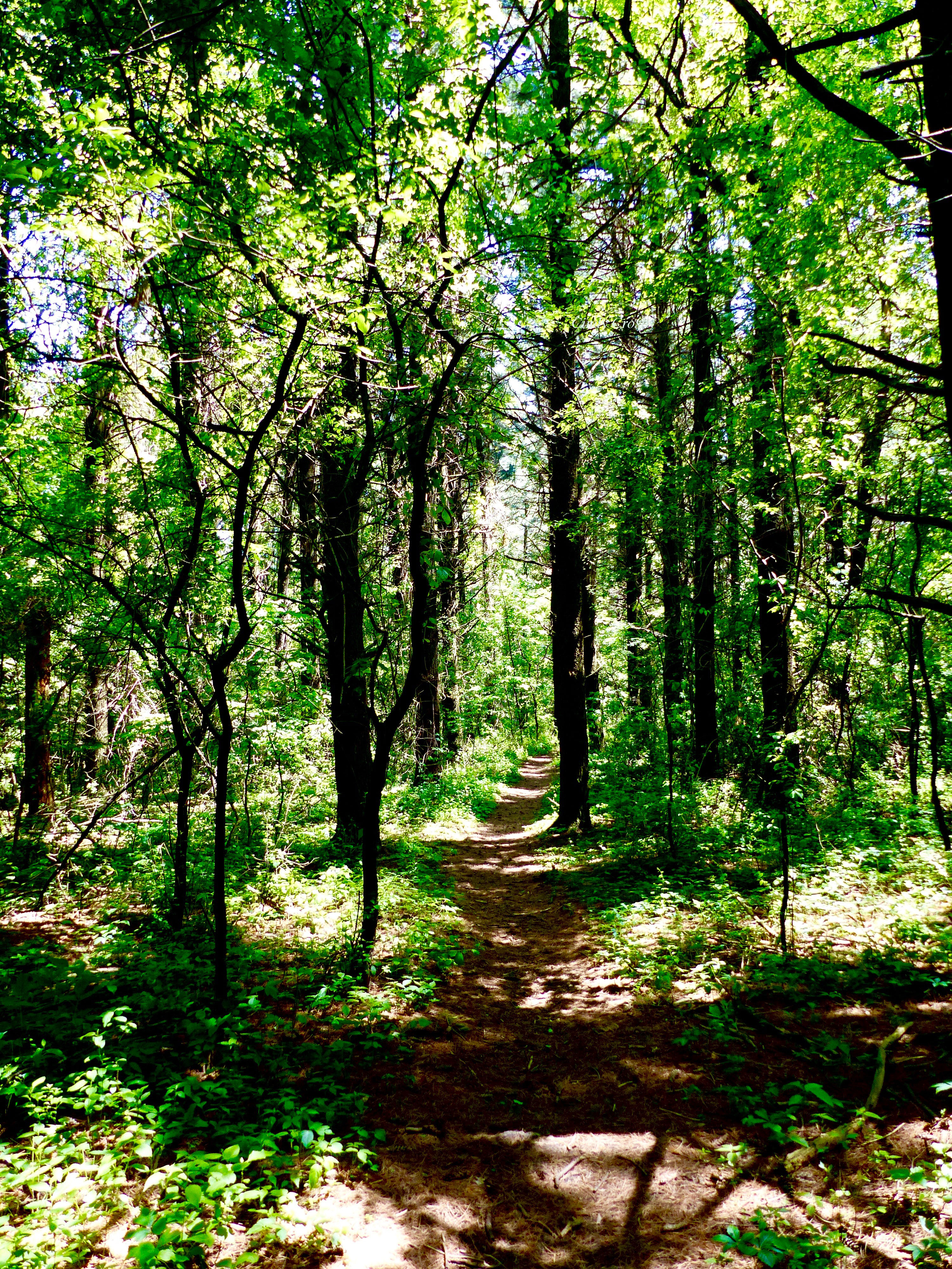 woodlandtrailGradyTract6719WM.jpg