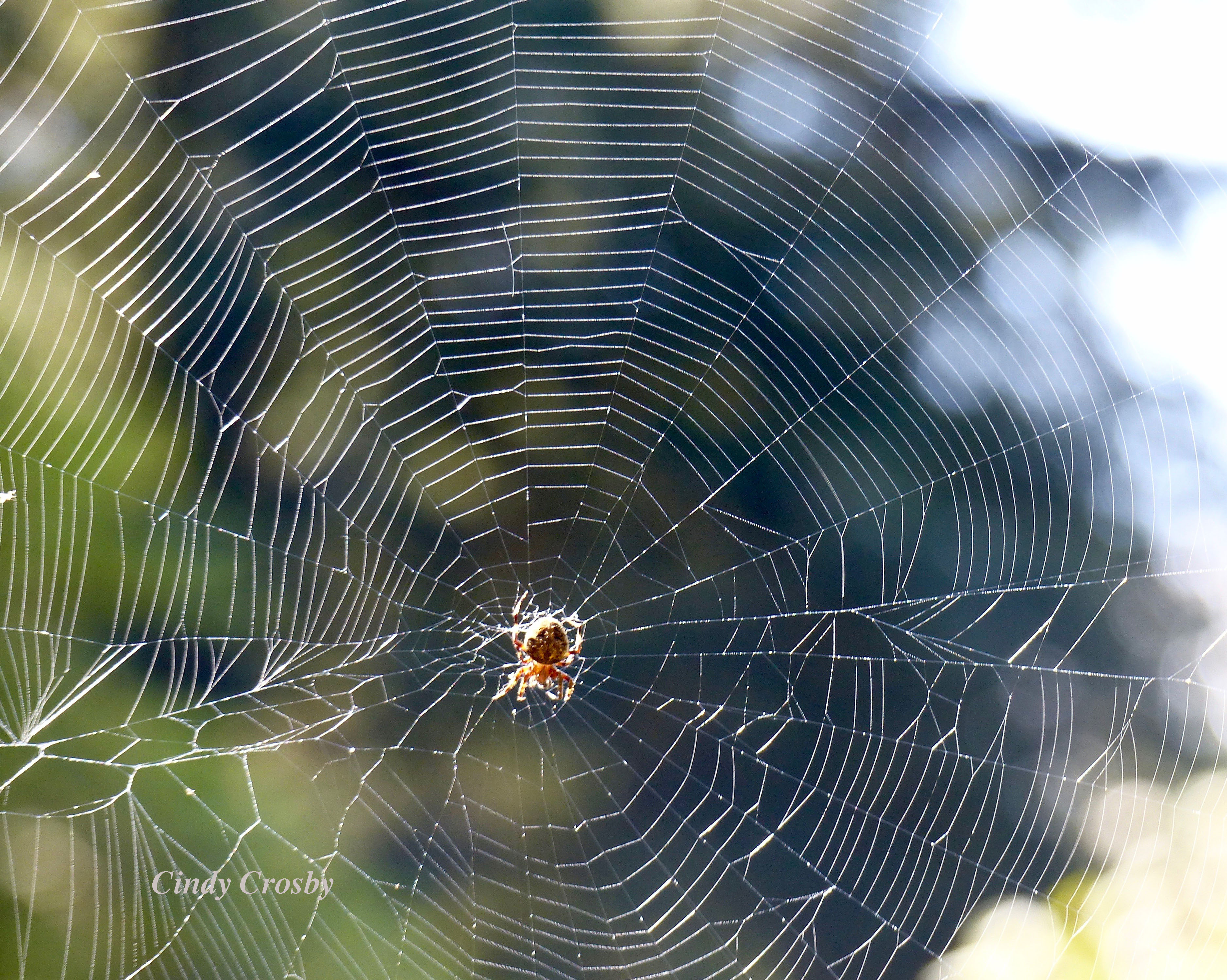 spider-Brown CountyWM2017.jpg