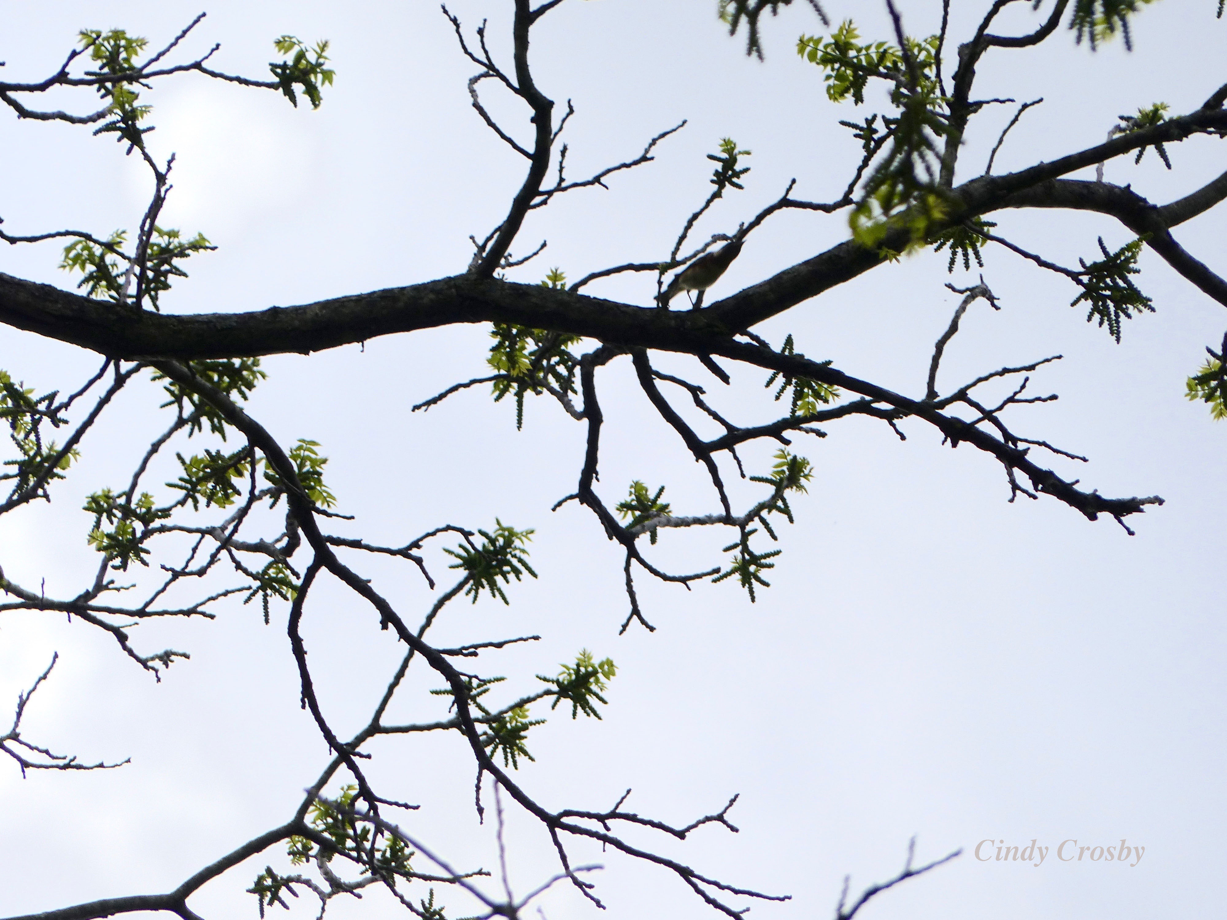 treeoverschulenbergprairieWM2019.jpg