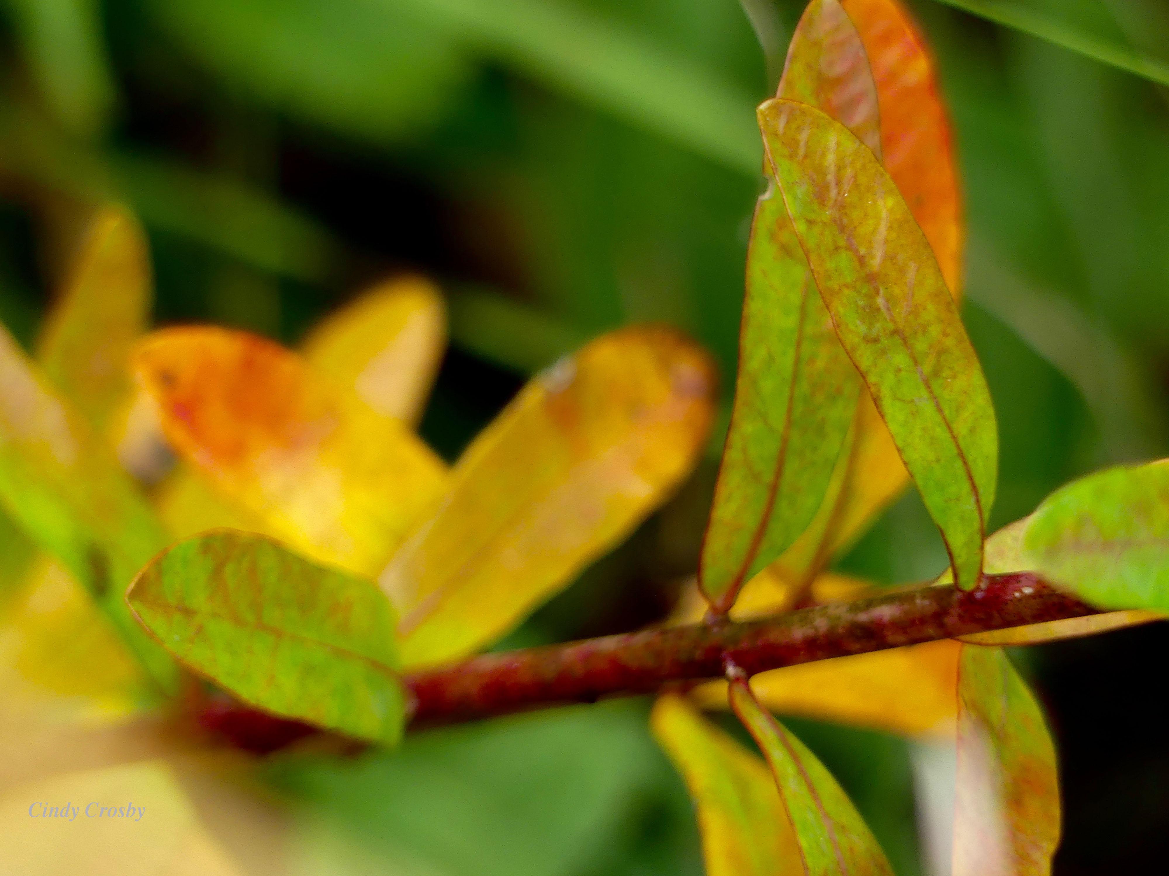 floweringspurge92219BelmontPrairieWM.jpg