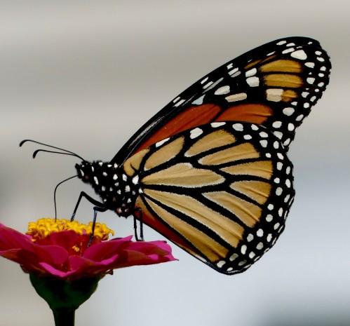 Monarch Backyard GE 9219WM.jpg