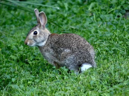 Rabbit91419GEWMWM.jpg