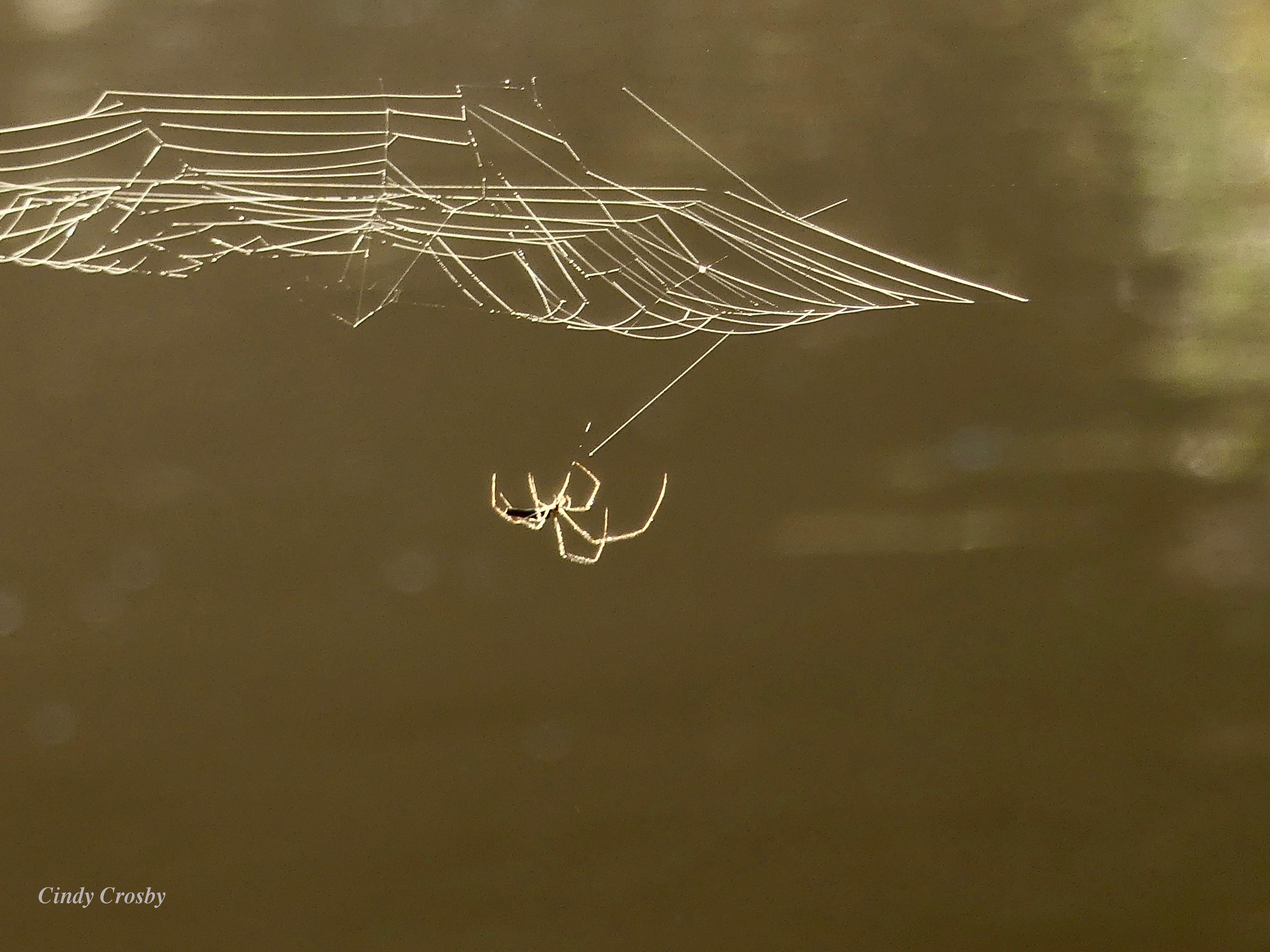 spideroverwillowaybrookwebfogSPMA93019WM.jpg