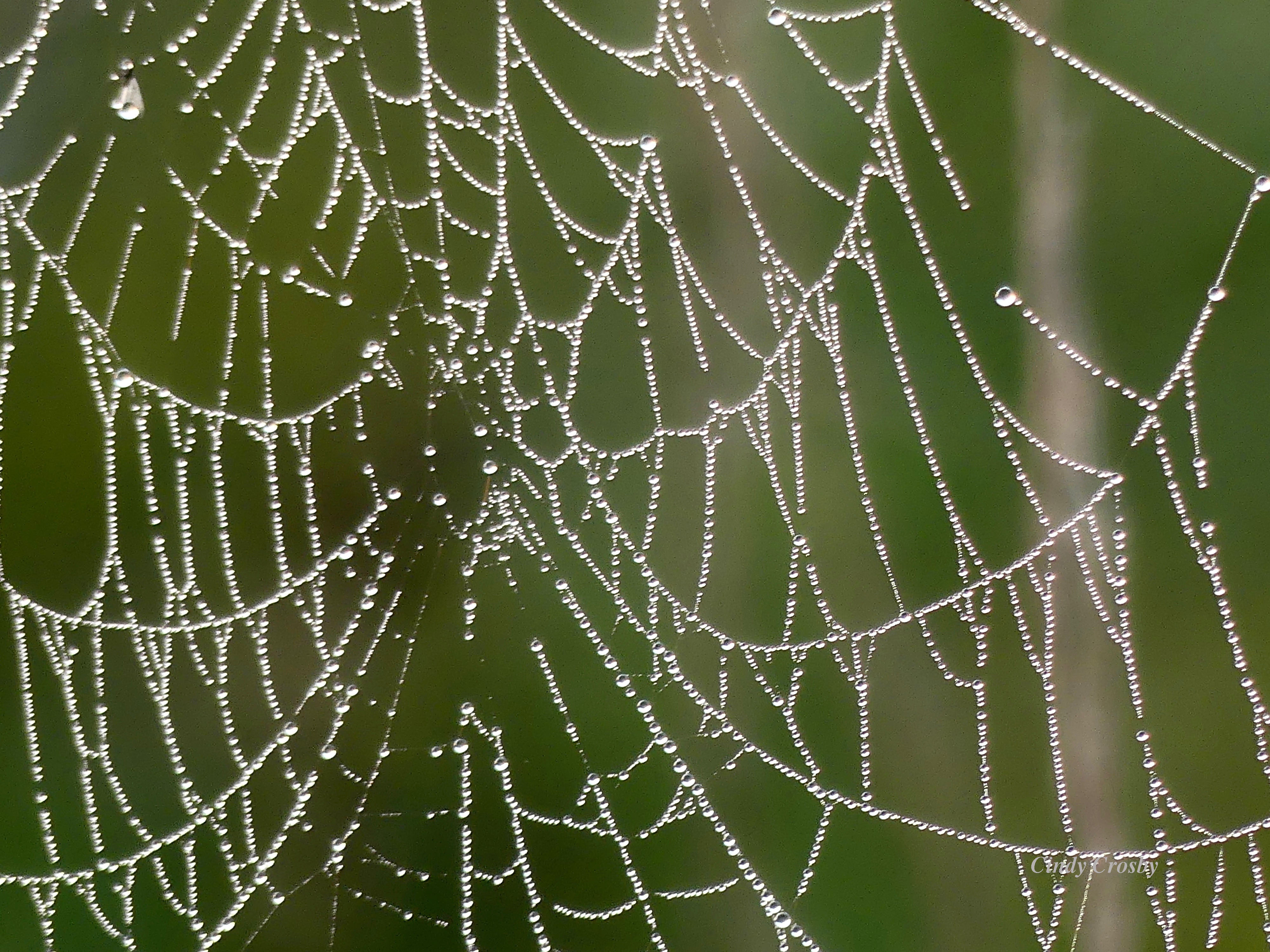 spiderwebcloseupSPMA93019WMfogdew.jpg