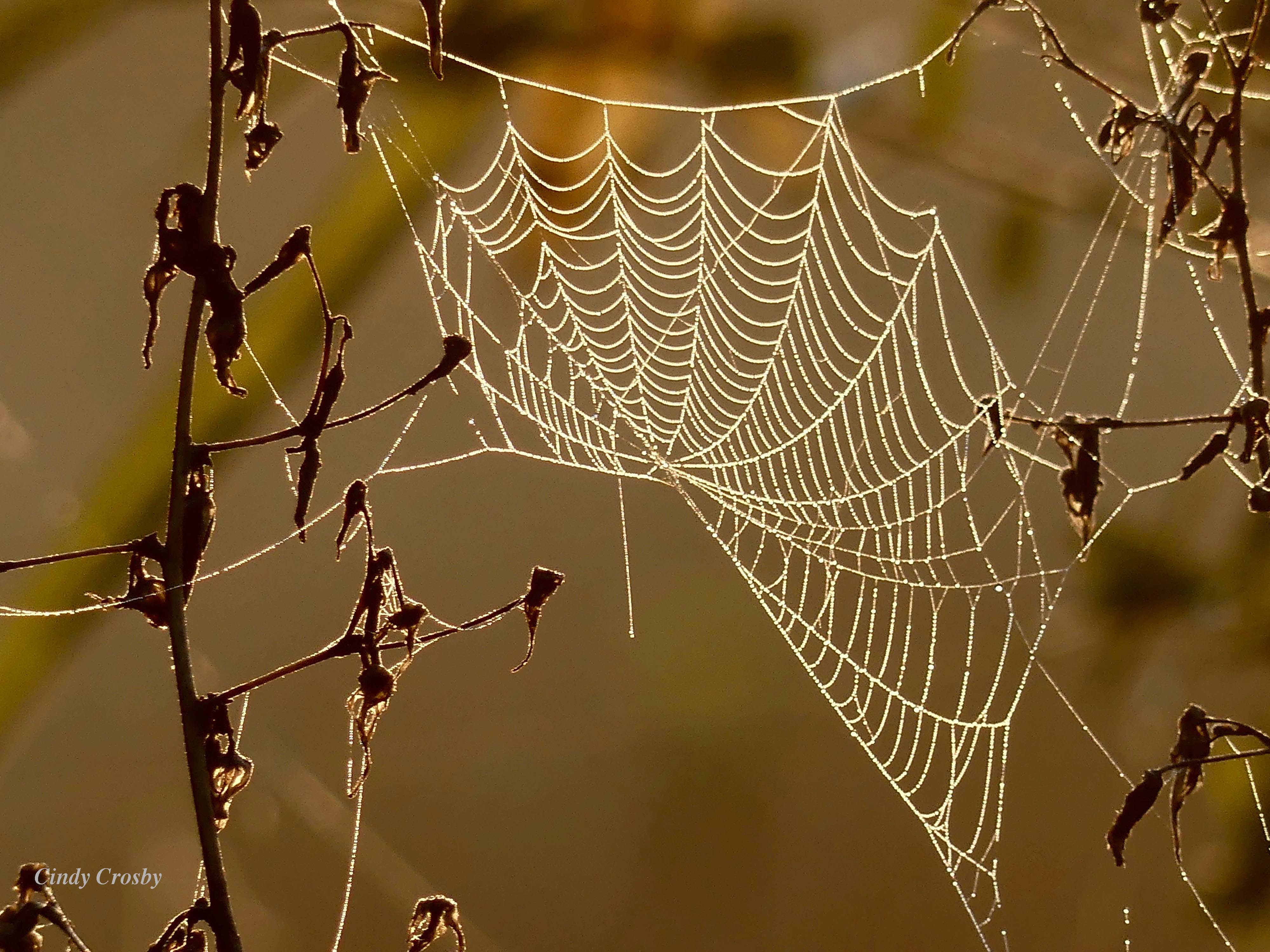spiderwebdewfogSPMA93019WM.jpg