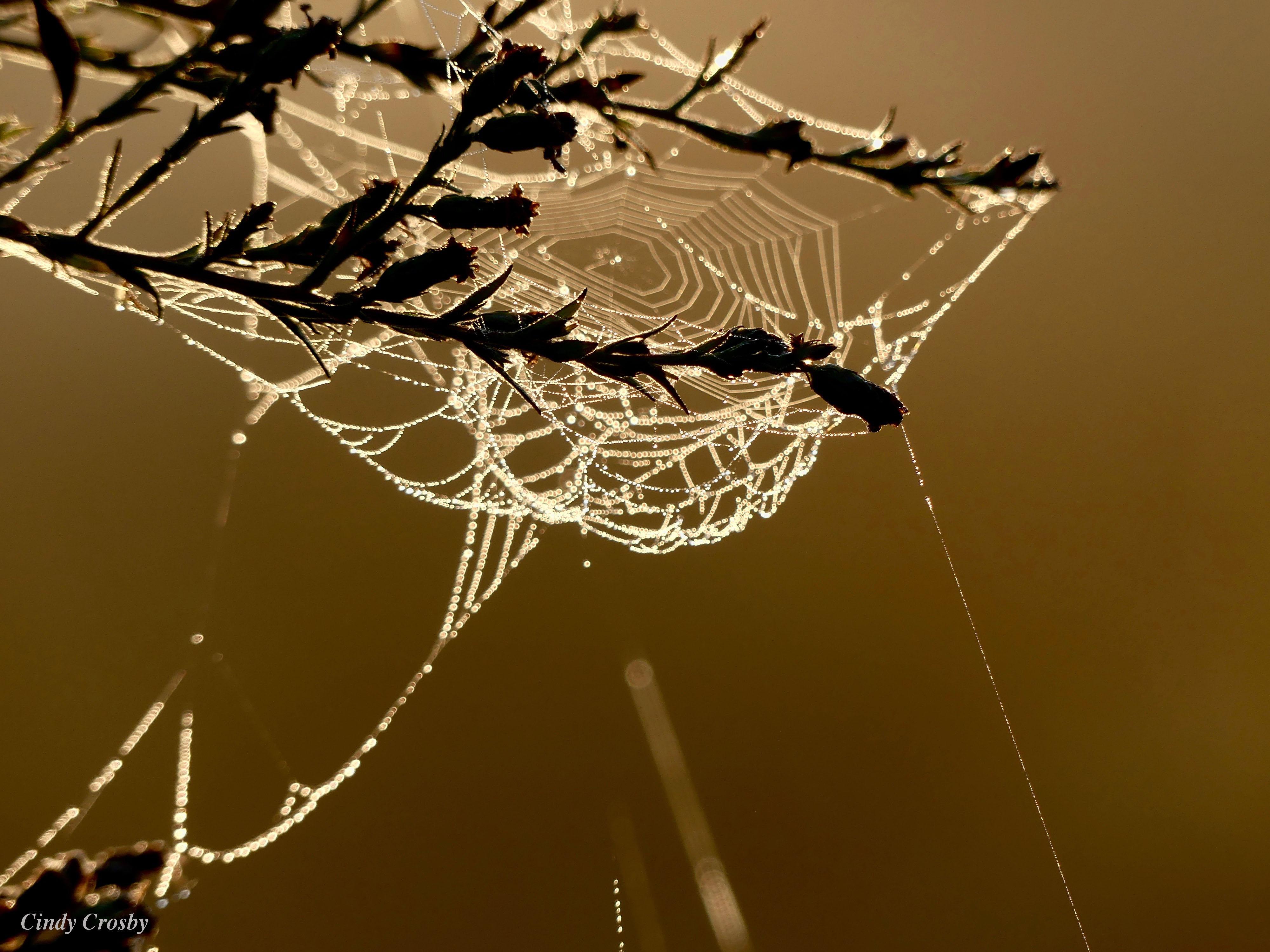 spiderwebdewfogwestsideMA93019WM.jpg