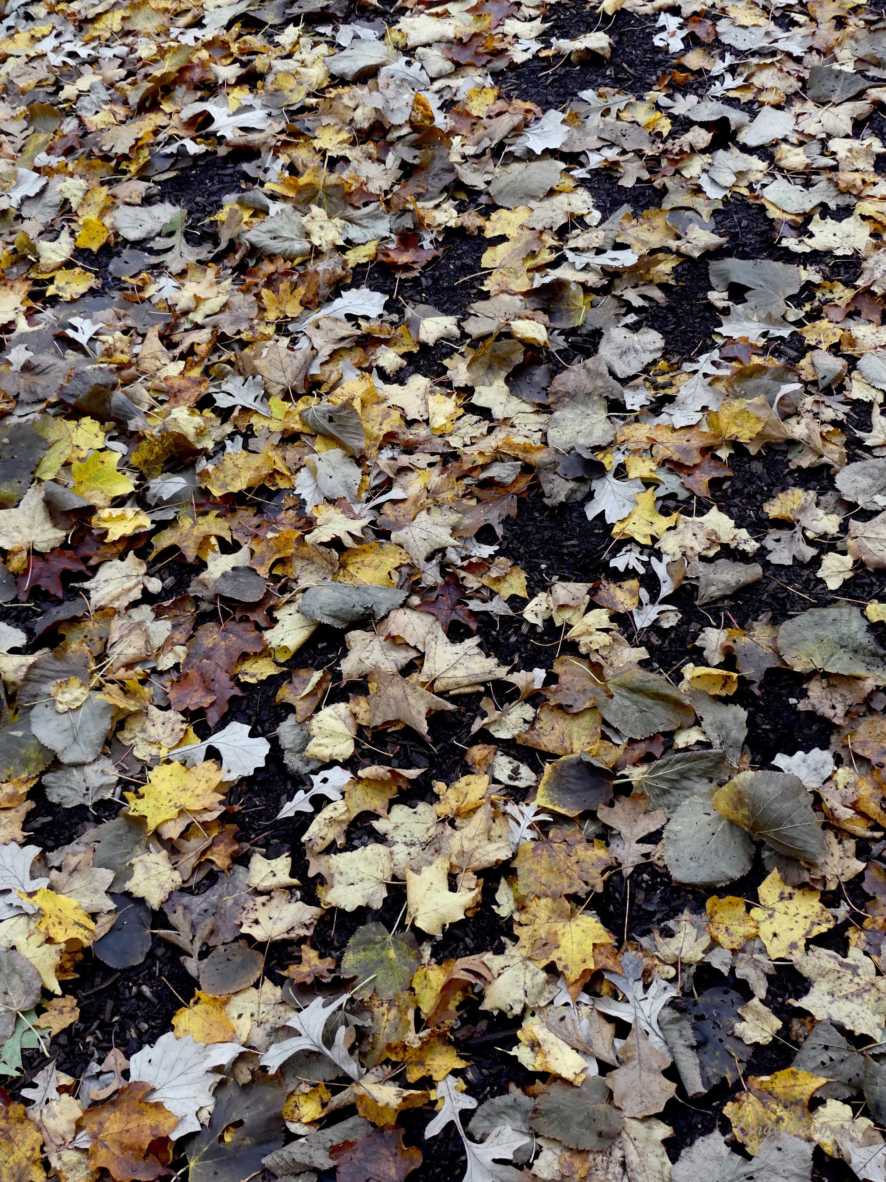 leavespmasav102819WM.jpg