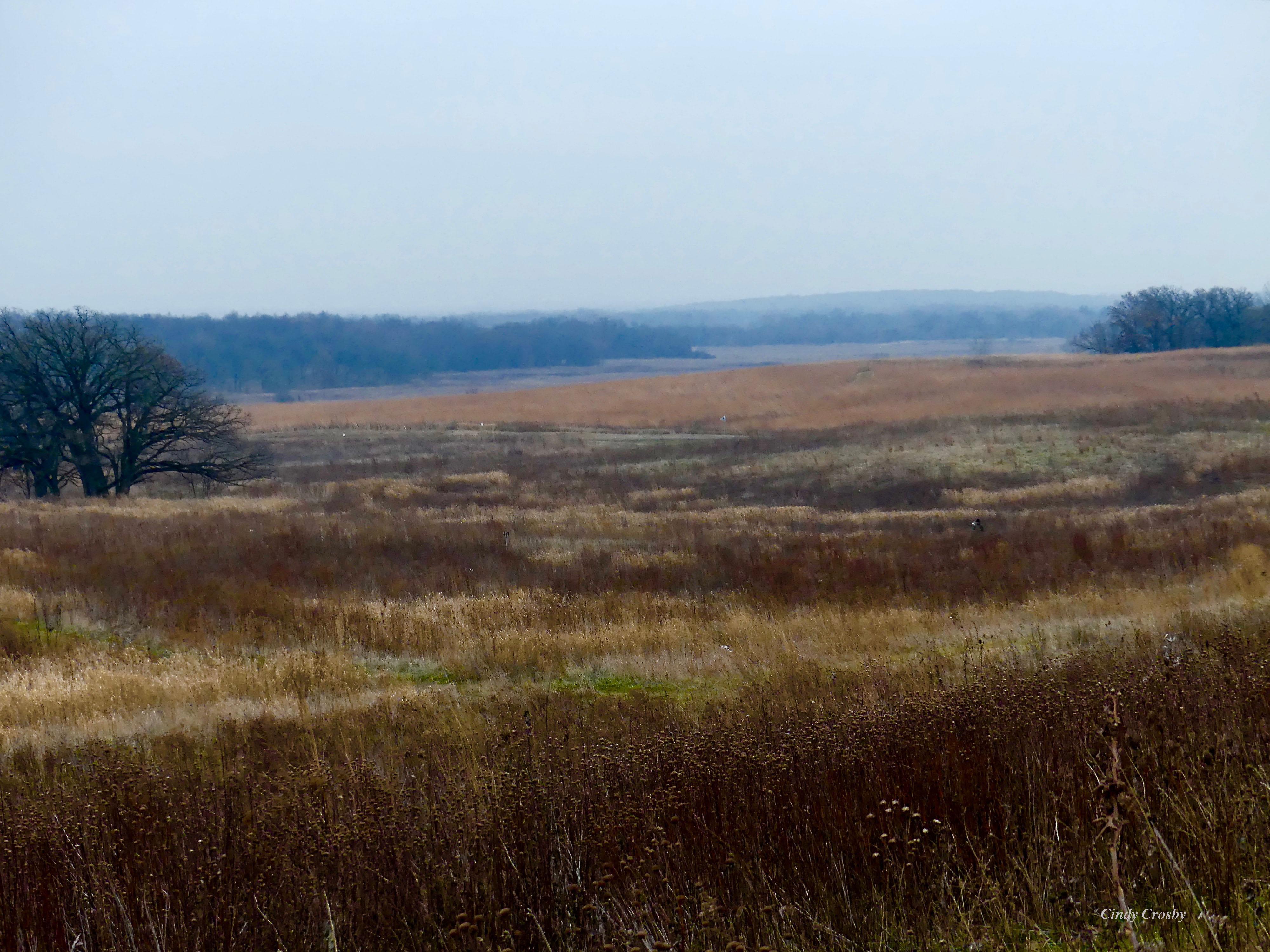 prairieviewlandscape12819WM.jpg