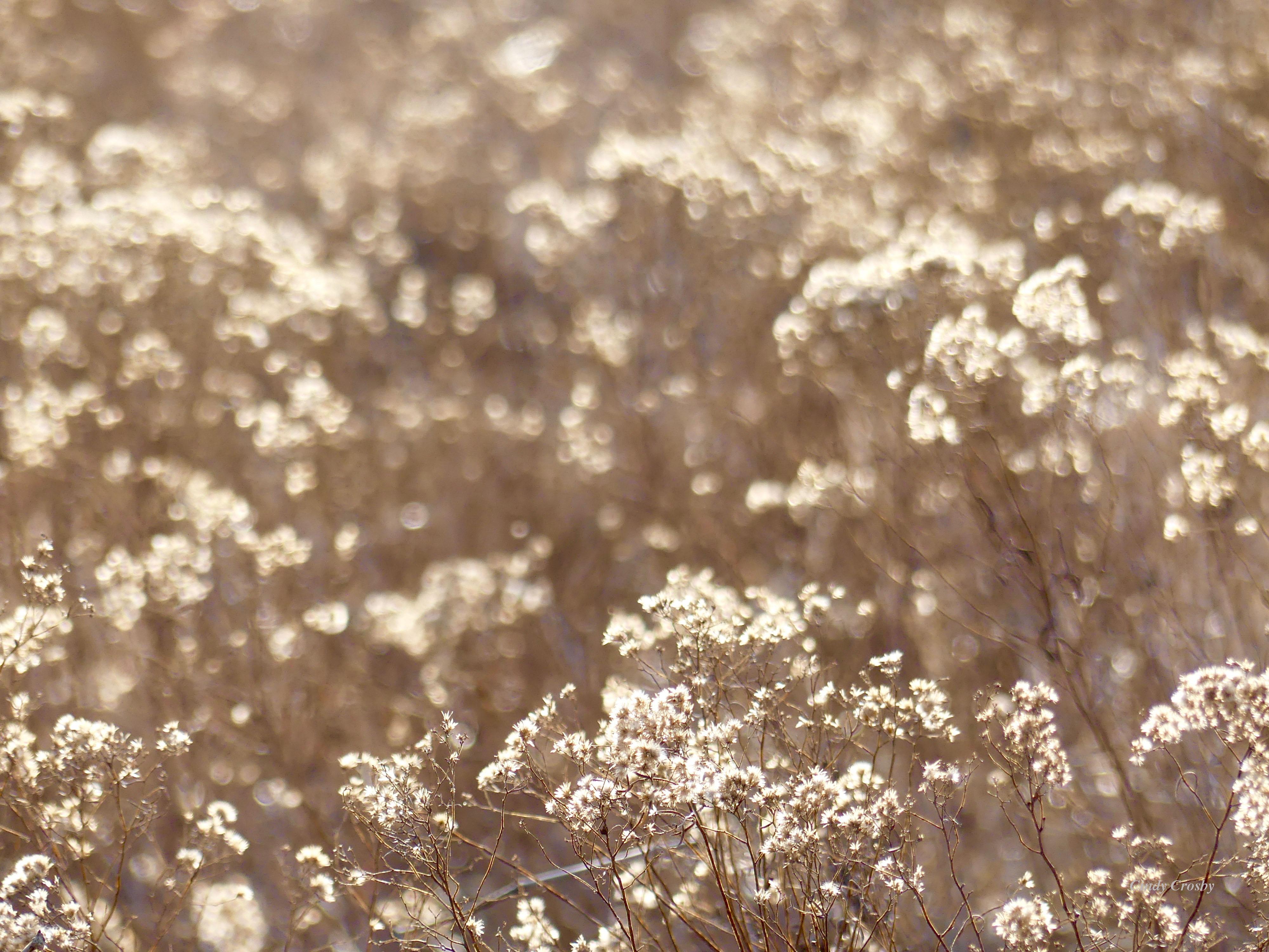 SundropPrairie122719backlitWM.jpg