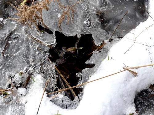 iceandstreamwithiris12020BelmontPrairieWM.jpg