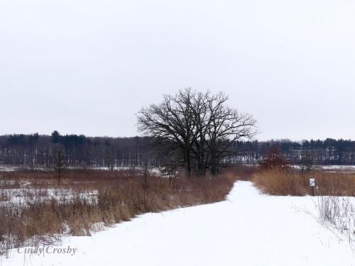 Curtis Prairie Madison UW Arboretum Trails 12920WM.jpg