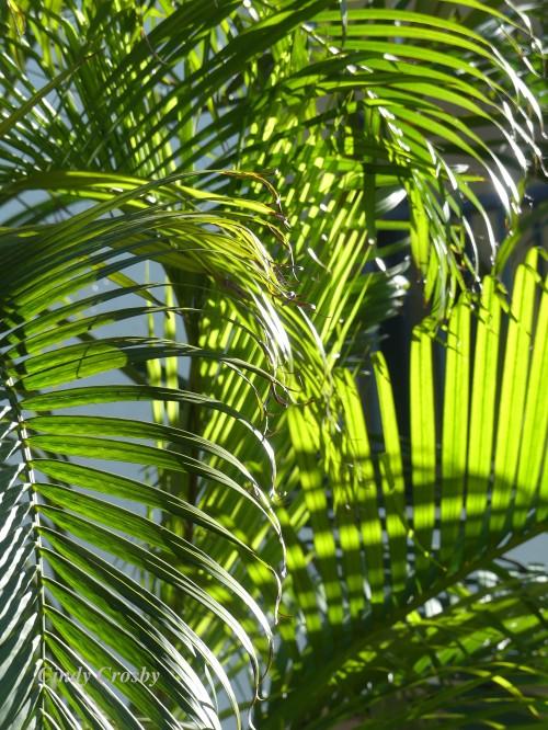 palmtreesCaptivaIsland2320WM.jpg