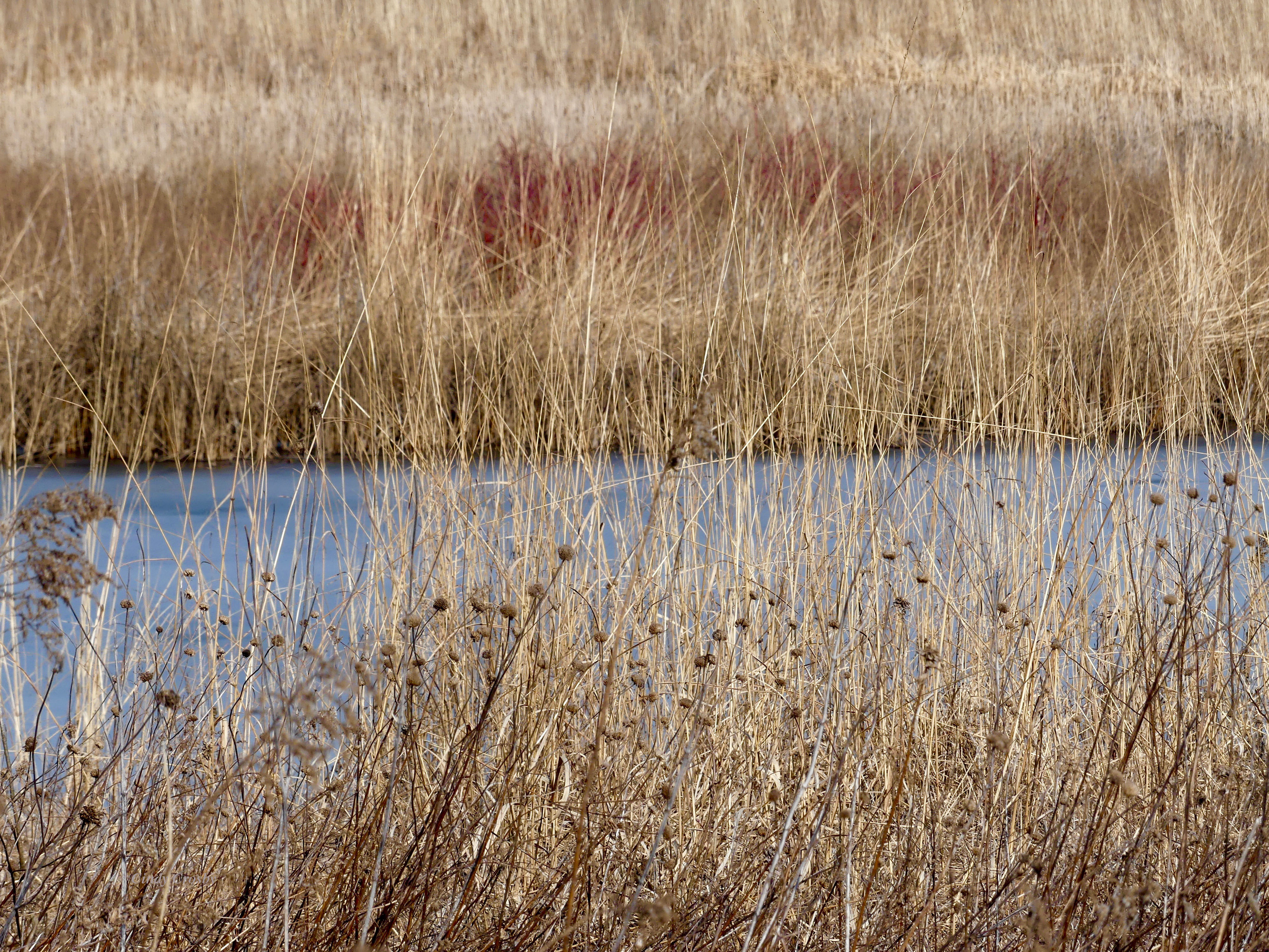 grassesandwaterspringbrookprairie3120WM.jpg