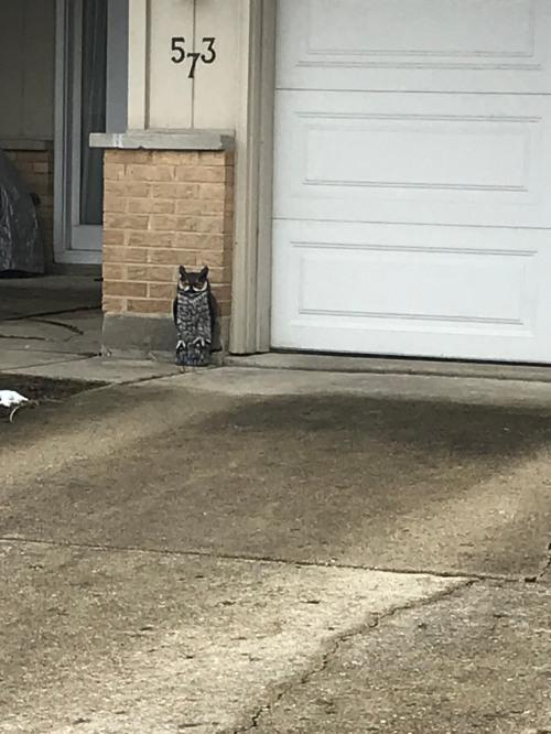 owl 32320WM.jpg