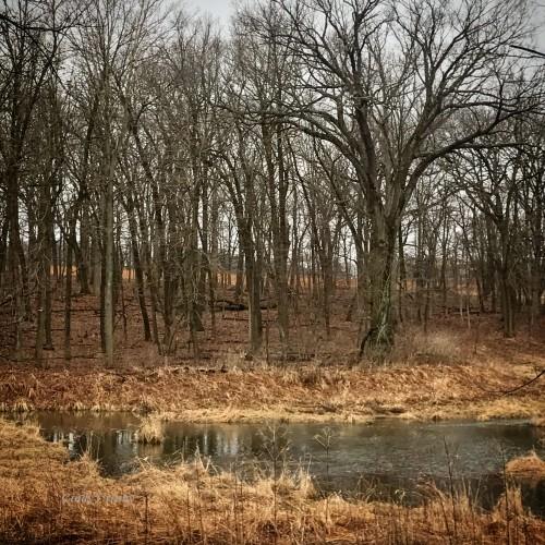 Schulenberg Prairie SavannaWM 32920.jpg