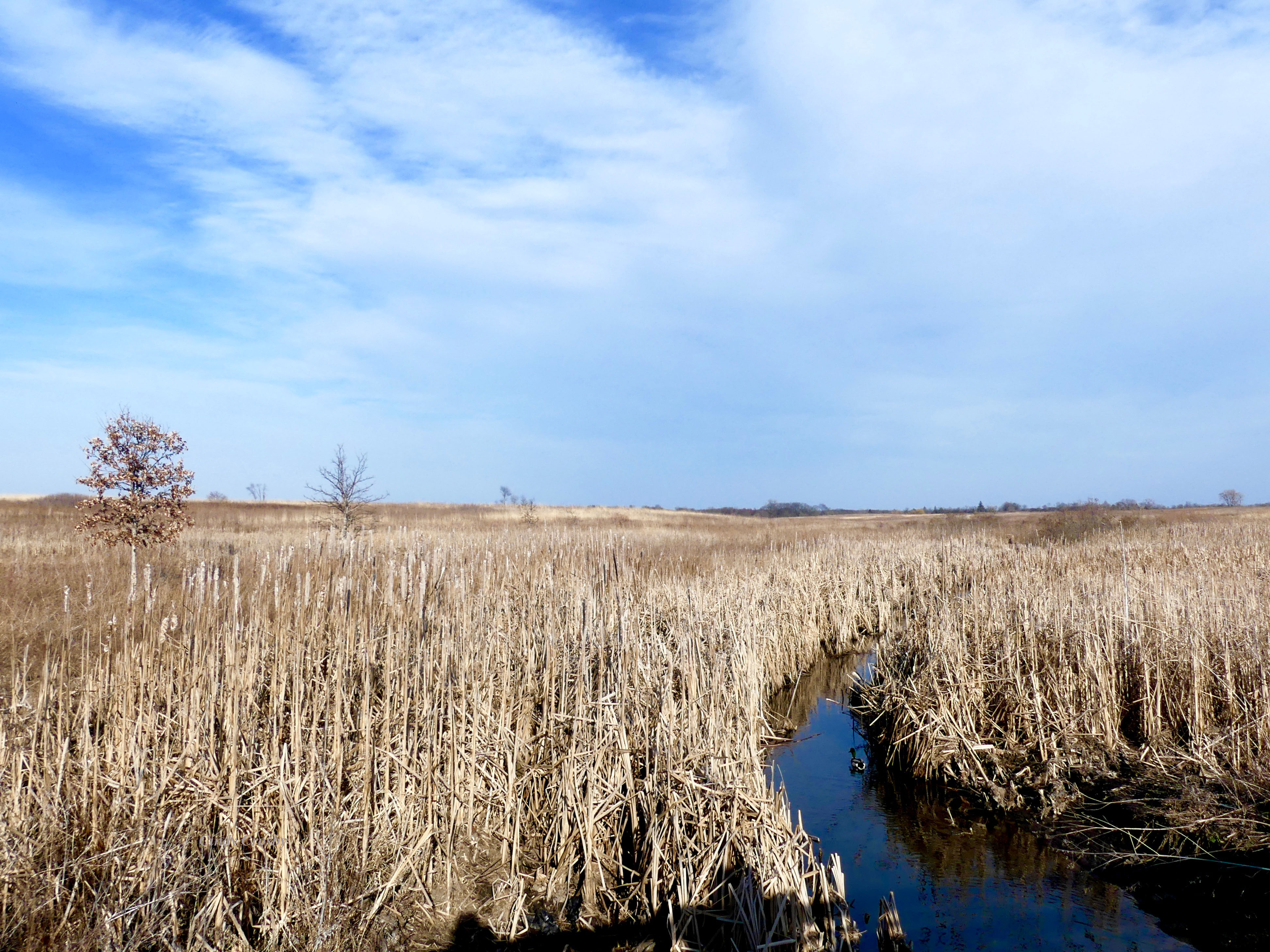 streamthroughSpringBrookPrairie3120WM.jpg